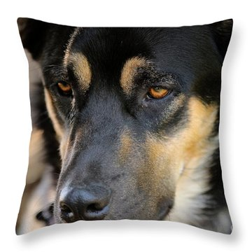 Shepherd Face Throw Pillow