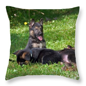 Shepherd Pups 20 Throw Pillow by Aimee L Maher Photography and Art Visit ALMGallerydotcom