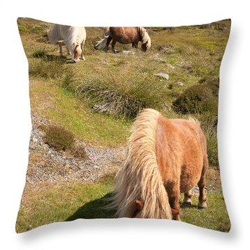 Shetland Ponies Throw Pillow
