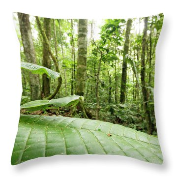 Amazon Rainforest Throw Pillows