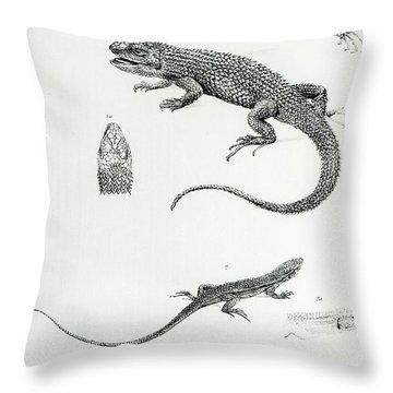 Shingled Iguana Throw Pillow by English School
