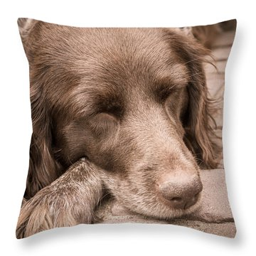 Shishka Dog Dreaming The Day Away Throw Pillow by Peta Thames