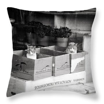 Throw Pillow featuring the photograph Shop Window Cats by Laura Melis