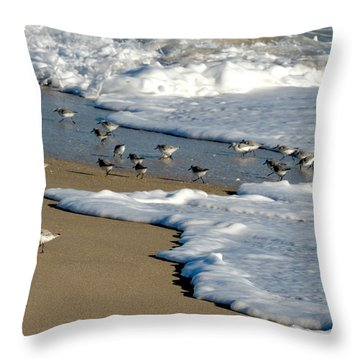 Shore Birds South Florida Throw Pillow