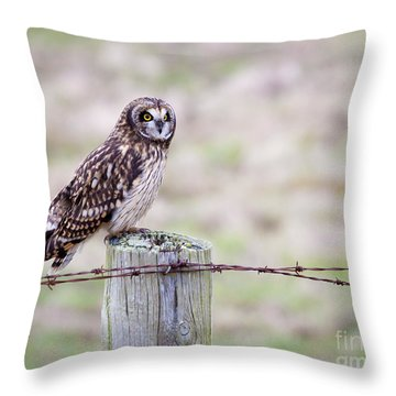 Short Eared Owl Boundary Bay Throw Pillow