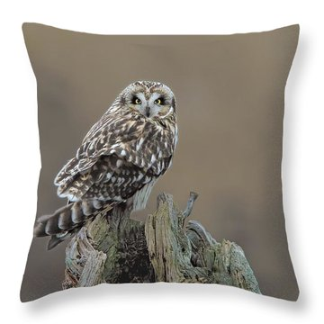 Throw Pillow featuring the photograph Short Eared Owl by Daniel Behm