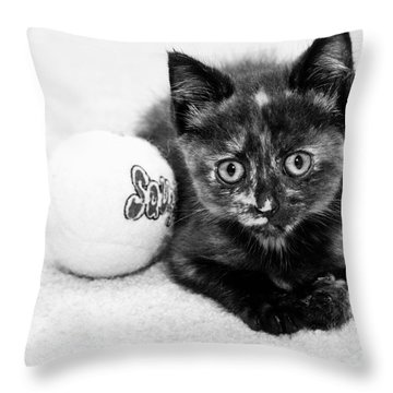 Short Hair Kitten Throw Pillow by Lawrence Burry