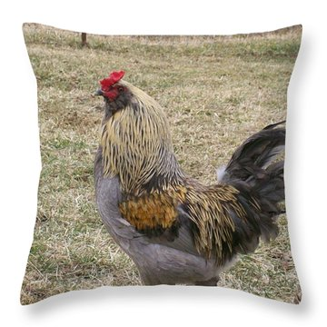 Throw Pillow featuring the photograph Showing Off  by Sara  Raber
