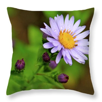 Showy Aster Throw Pillow by Ed  Riche
