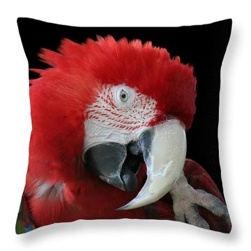 Shy Macaw Throw Pillow by Judy Whitton
