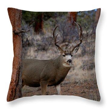 Shy Mule Deer Throw Pillow by Sherlyn Morefield Gregg