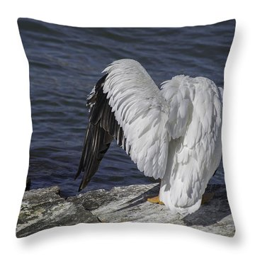 Shy Pelican Throw Pillow by Diego Re