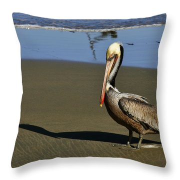 Shy Pelican Throw Pillow by Gandz Photography