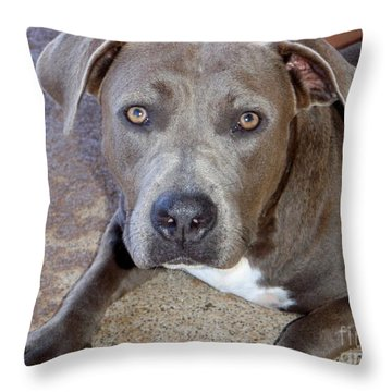 Shy Pit Bull Puppy Throw Pillow by Mary Deal