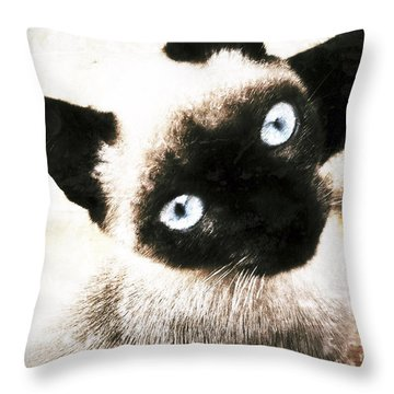 Throw Pillow featuring the photograph Siamese Cat by Selke Boris