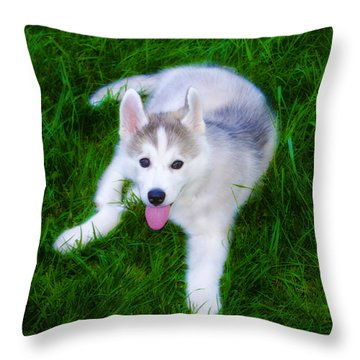 Siberian Huskie Throw Pillow by Bill Cannon