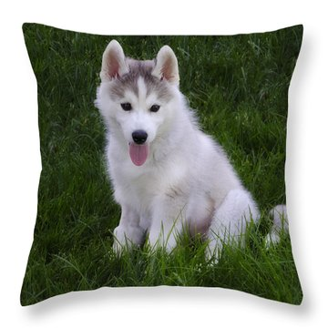 Siberian Huskie Pup Throw Pillow by Bill Cannon