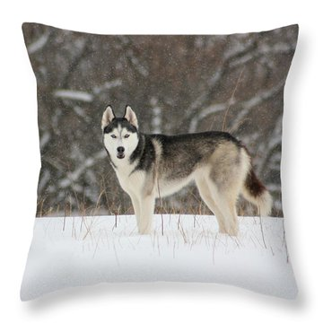 I've Been Spotted Throw Pillow