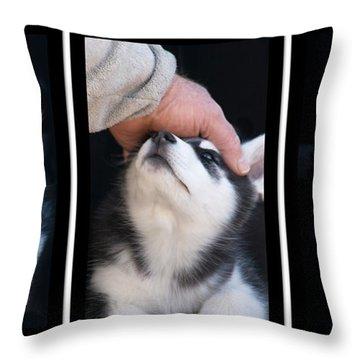 Siberian Husky Puppies Mans Best Friend Throw Pillow