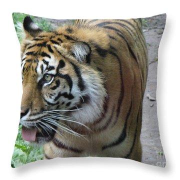 Throw Pillow featuring the photograph Siberian Tiger by Lingfai Leung