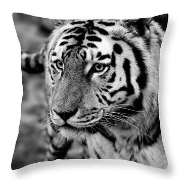 Siberian Tiger Monochrome Throw Pillow by Semmick Photo