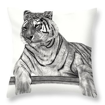 Throw Pillow featuring the drawing Siberian Tiger by Patricia Hiltz