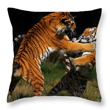 Throw Pillow featuring the photograph Siberian Tigers In Fight by Nick  Biemans