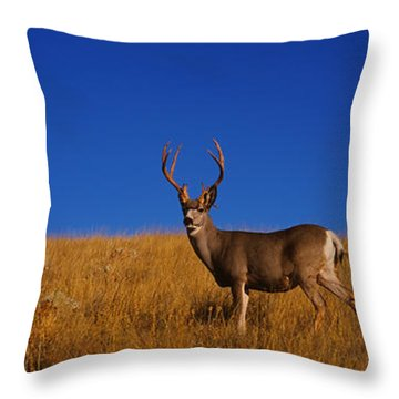 Side Profile Of A Mule Deer Standing Throw Pillow