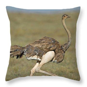 Side Profile Of An Ostrich Running Throw Pillow