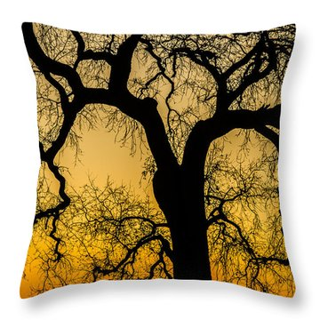 Silhouette Oak Throw Pillow