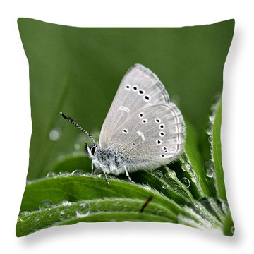 Silver Butterfly Throw Pillow