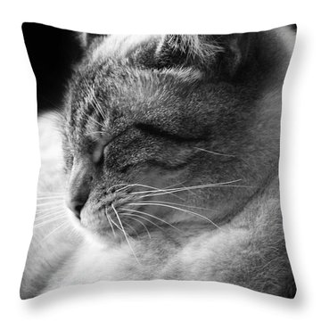 Silver Lynx Point Throw Pillow