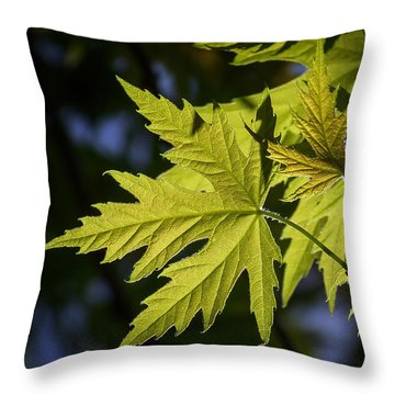 Silver Maple Throw Pillow by Ernie Echols