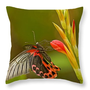 Silver Spotted Flambeau Throw Pillow by Nick  Boren