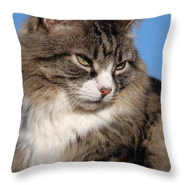Silver Tabby Cat Throw Pillow