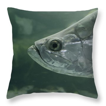 Silver Tarpon Throw Pillow