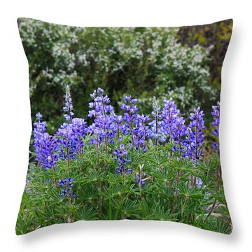 Throw Pillow featuring the photograph Silvery Lupine Black Canyon Colorado by Janice Rae Pariza