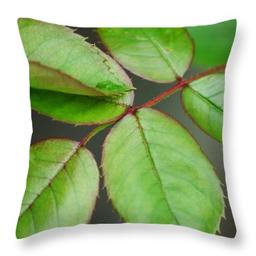 Simple Elegance Throw Pillow by Frozen in Time Fine Art Photography