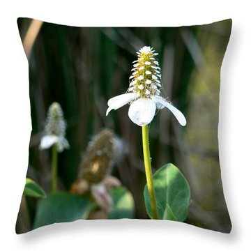 Throw Pillow featuring the photograph Simple Flower by Laurel Powell