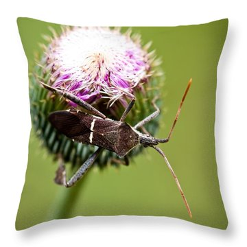 Simplistic Wonder Throw Pillow by Charles Dobbs