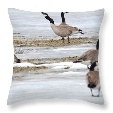 Throw Pillow featuring the photograph Singing A Tune by Dacia Doroff