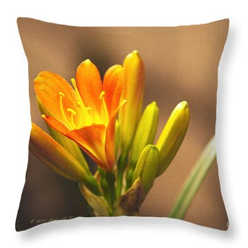 Single Kaffir Lily Bloom Throw Pillow