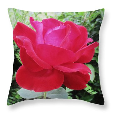 Single Red Rose Throw Pillow by Kathy Spall