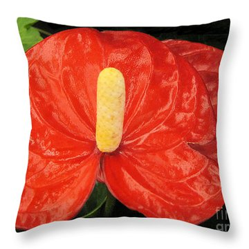 Throw Pillow featuring the photograph Single Red Spath Flower by Merton Allen