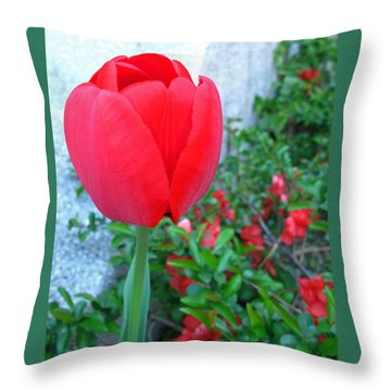 Single Red Tulip Throw Pillow by Barbara McDevitt