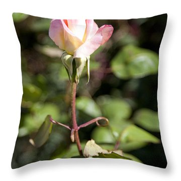 Single Rose Throw Pillow by David Millenheft