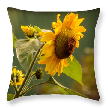 Single Sunflower  Throw Pillow by Yvon van der Wijk