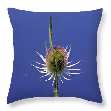 Single Teasel Throw Pillow