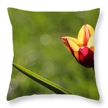 Single Tulip Throw Pillow by Kenny Glotfelty