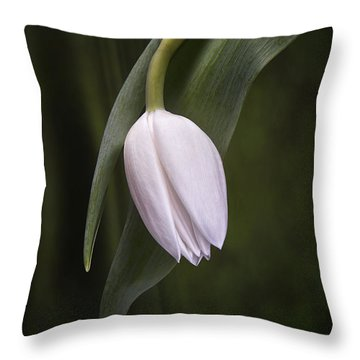 Single Tulip Still Life Throw Pillow by Tom Mc Nemar